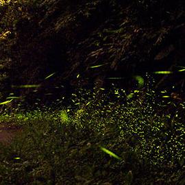 【新北雙溪】邂逅螢光 - 親子生態體驗一日遊