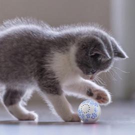 寵物智能陪伴球
